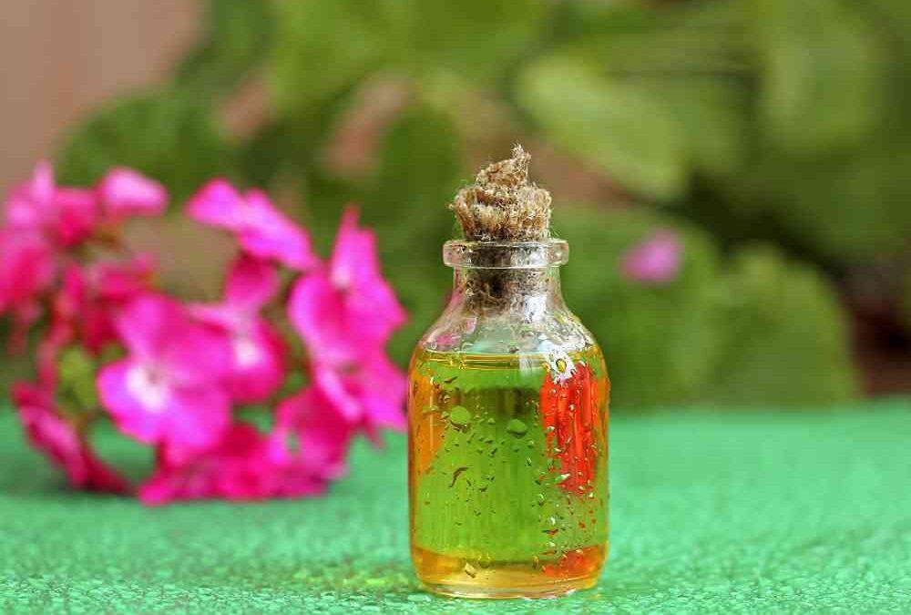 Olio essenziale di geranio: riequilibrio e buoni pensieri